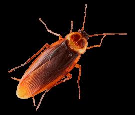 Таракан крупным планом фото